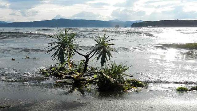 La mayor extinción en la Tierra pudo ser causada por erupciones volcánicas en Siberia