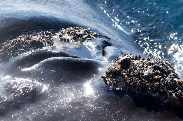 espiraculos de la ballena franca
