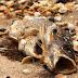 Sở Tài nguyên Môi trường Hà Tĩnh đã làm gì trong cuộc khủng hoảng cá chết?