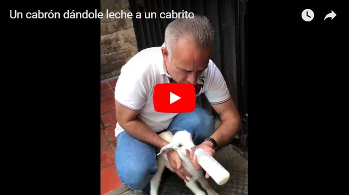 Freddy Bernal dándole de mamar leche a un cabrito