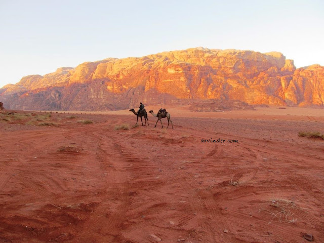 Ride camel across wadi rum