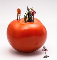 Belt Scales Improve Tomato Processor Efficiency