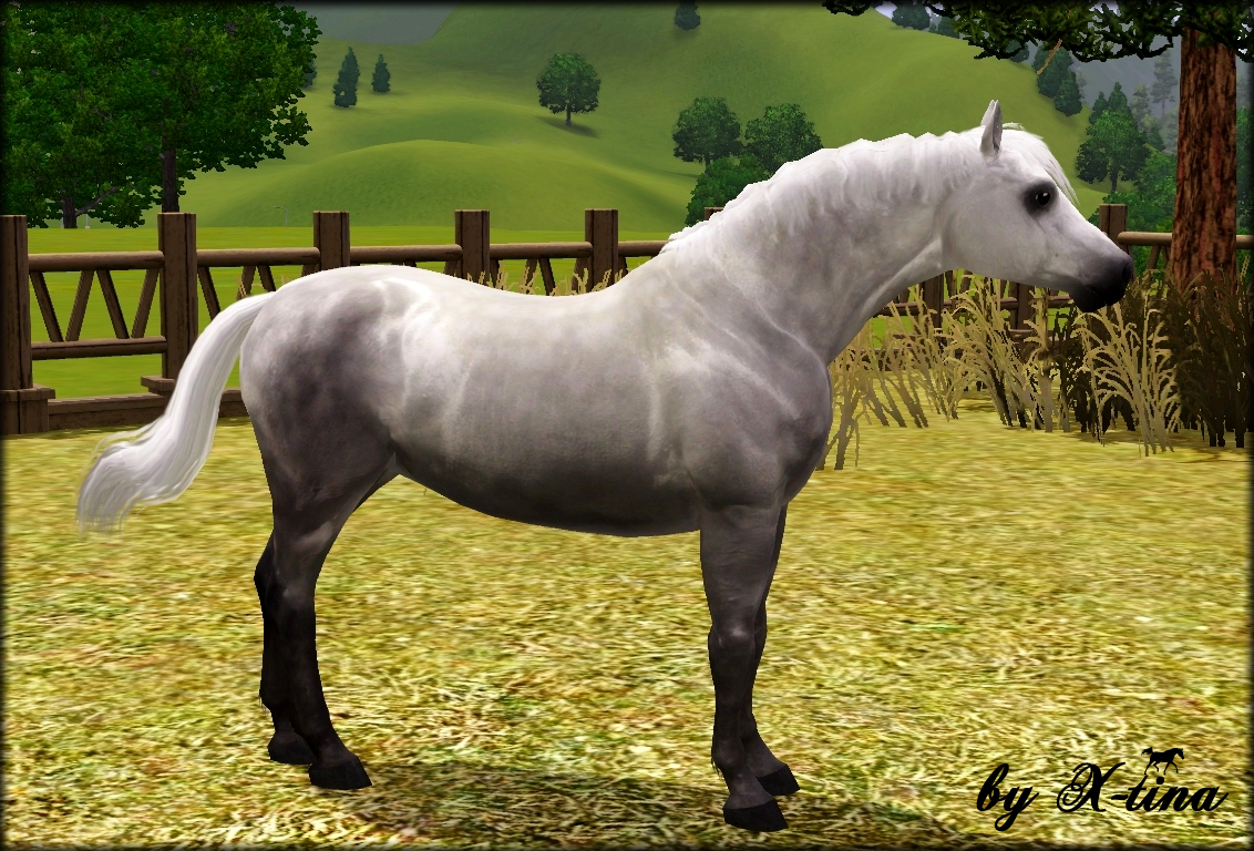Welsh Mountain Pony (Section A) by X-tina