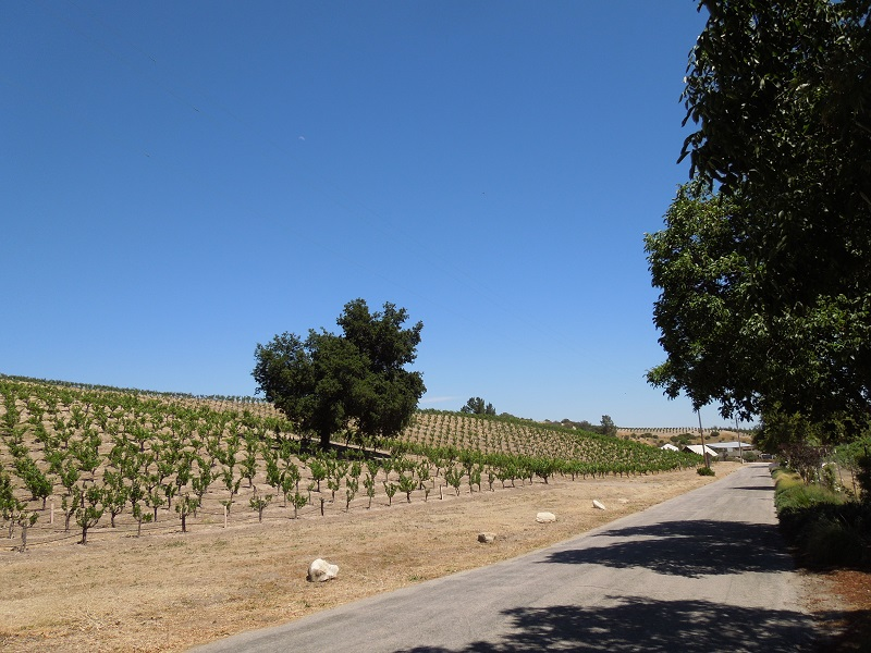Winery Road, Templeton, looking south.