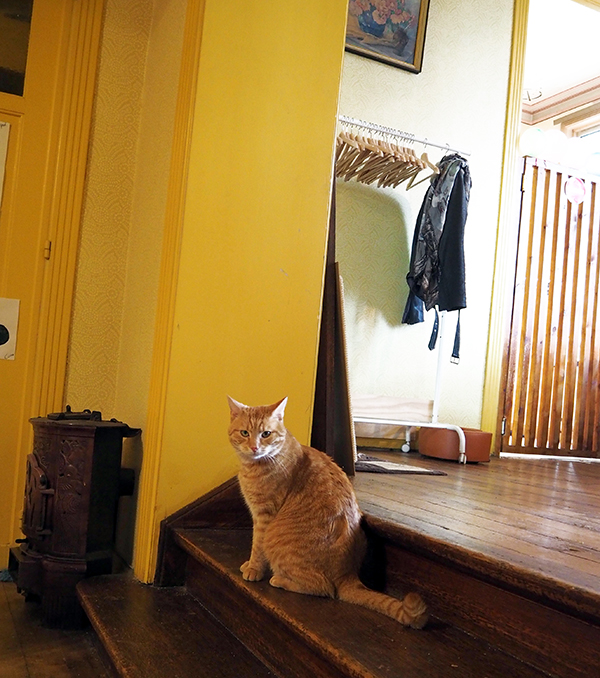 ginger cat cafe