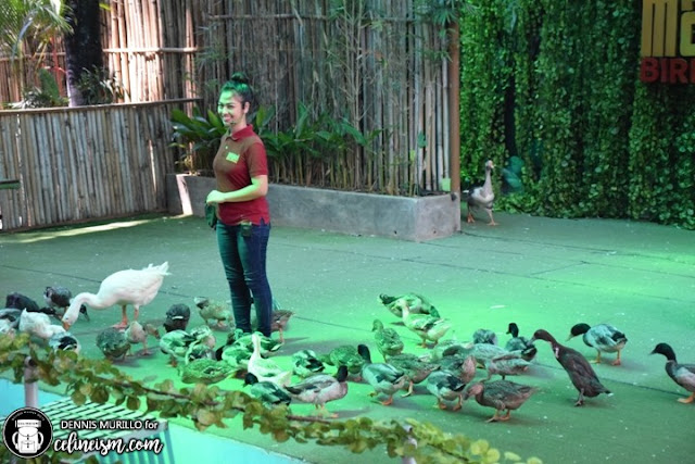 bird show philipppines