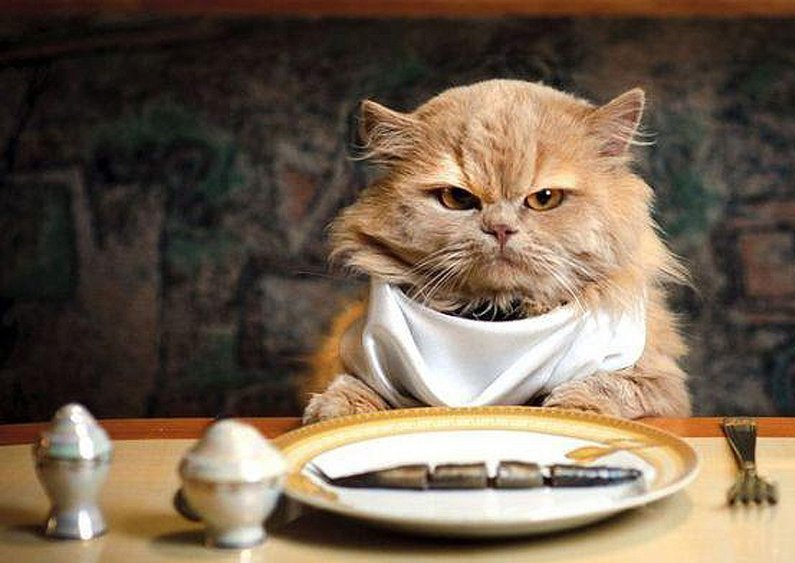animais de  Receitas Caseiras de Comida de Gato