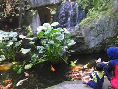 Taman rama rama melaka ikan koi