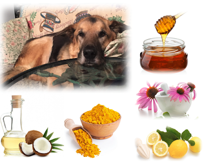 Natural Herbal Cough Syrup Recipe for Dogs