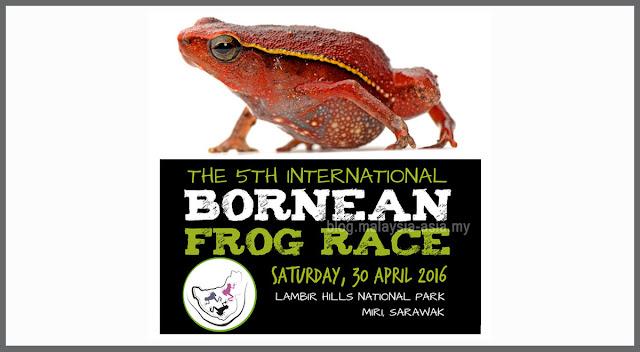 Frog Race in Sarawak Borneo