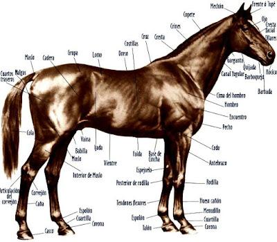 Dibujo de las partes de un caballo bien detallado