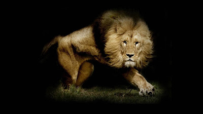 Lion Wallpapers - Lion desktop wallpapers - 2397 1920x1080 and 1920x1200 wallpapers
