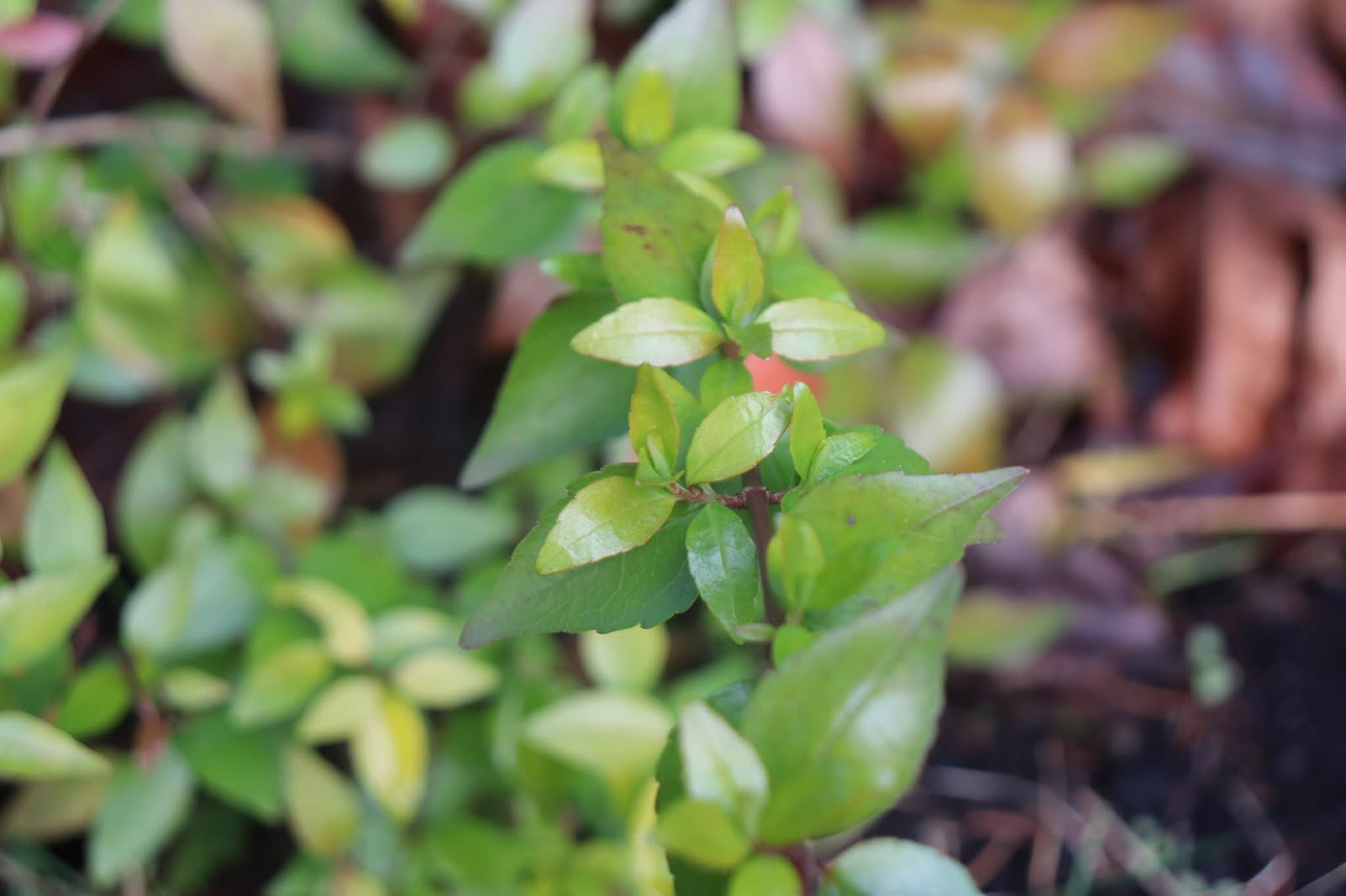 Winter Interest Shade Plants