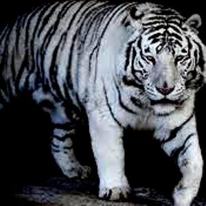 Mustika Harimau Putih