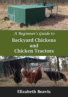 Backyard chickens and chicken tractors