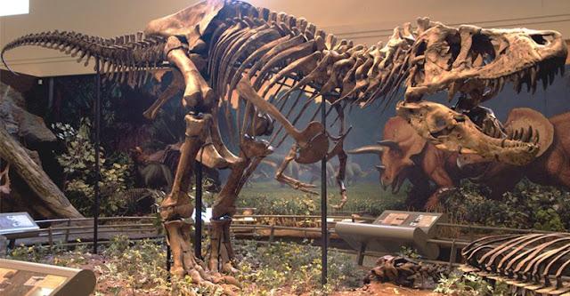 التيرانوصور Tyrannosaurus C-users-admin-desktop-ahsan-articles-2164-6-jpg