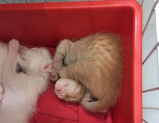 [feature]Gaya Kucing Tidur