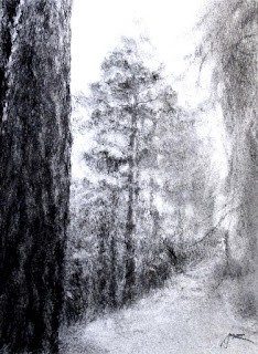 pine tree charcoal drawing by sue wellington