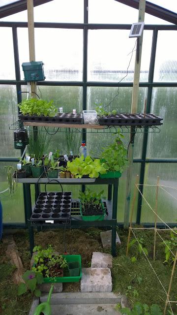 Gemüsepflanzenaufzucht im Gewächshaus (c) by Joachim Wenk