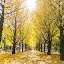 PUISI PUISI MAWARDI (Sumenep, Madura)_Pertemuan Dalam Satu Musim