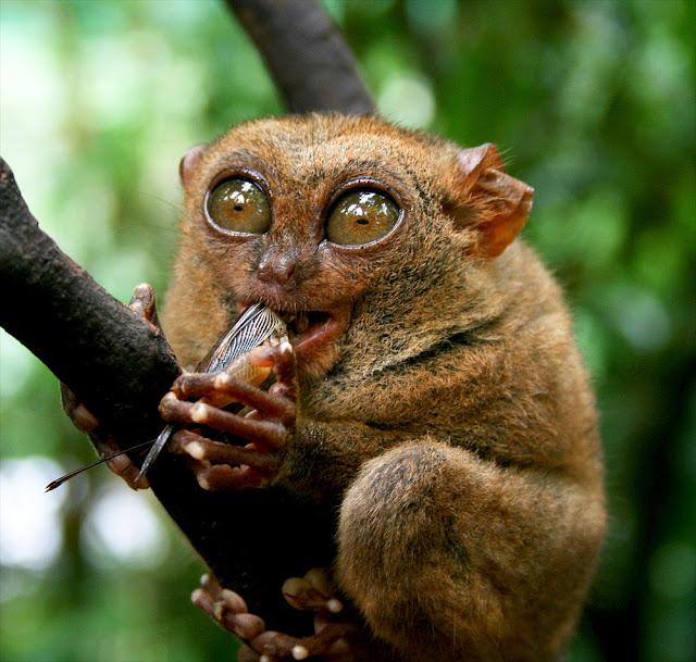 Miris! 10 Hewan Langka di Indonesia Ini Terancam Punah