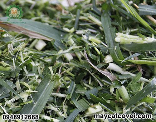 Cỏ sau khi băm bằng máy băm cây ngô, cỏ voi 3A 9Z-4C là thức ăn cho trâu, bò, dê, cừu...