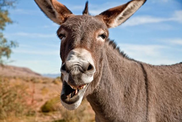Man Charged In A Nyeri Court For Raping A Donkey