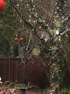 Photo of suet feeder with DIY vegan suet hanging on a tree branch outside with a gray squirrel on a limb above. https://trimazing.com/