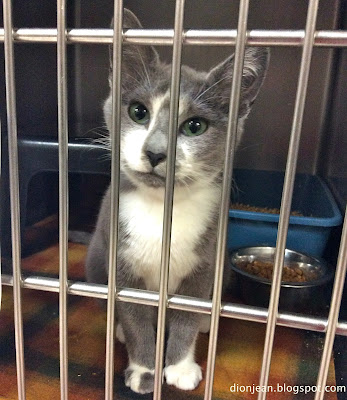 This sweet kitty is waiting in a shelter kennel for her home