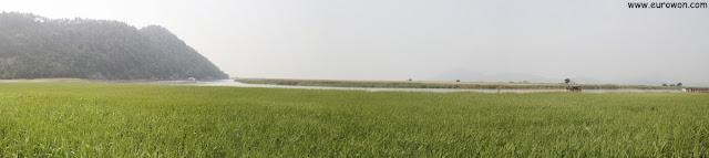 Panorámica del cañaveral de la Bahía Suncheonman