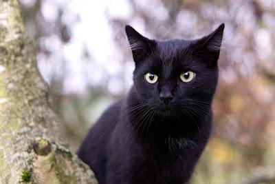 Male Black Cat Names