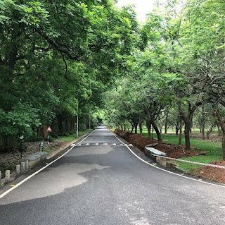 Green cover at IISc campus in Bangaore