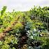 Agricultura sintrópica chega ao Paraná