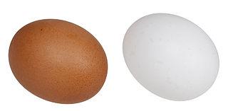 boleh atau tidak penderita diabetes makan telur ayam