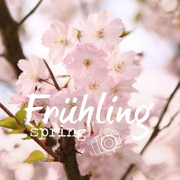 pinboard titelbild fruehling spring
