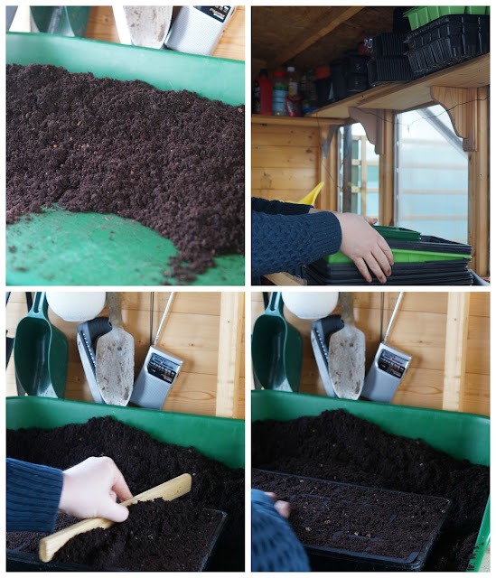 seed planting  - 'growourown.blogspot.com' ~ an allotment blog