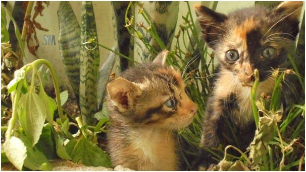 Rintihan Kucing Kecil di Malam Ramadhan yang Sunyi