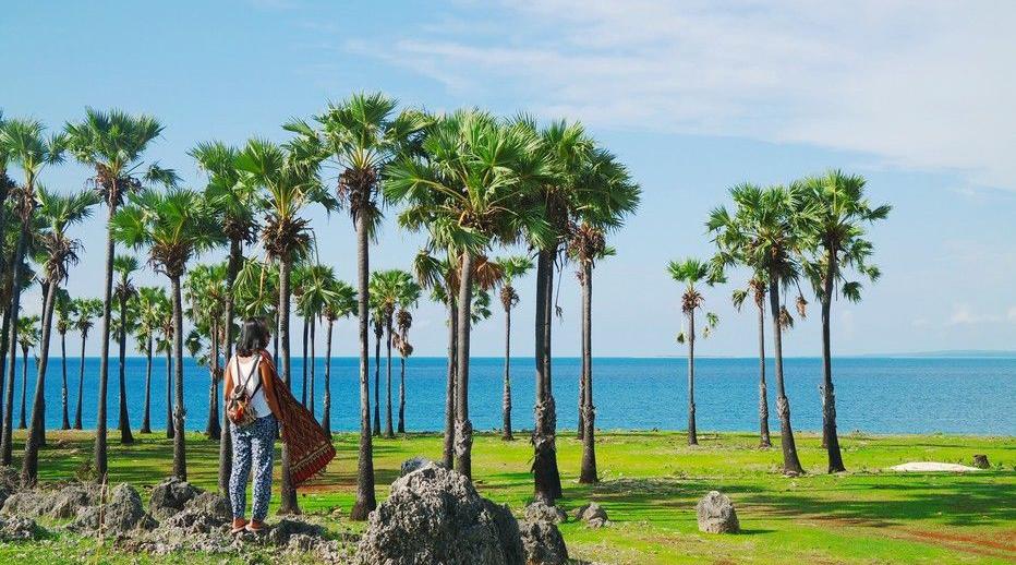 Pantai Lasiana pantai yang banyak pohon kelapa pasir putih dan indah