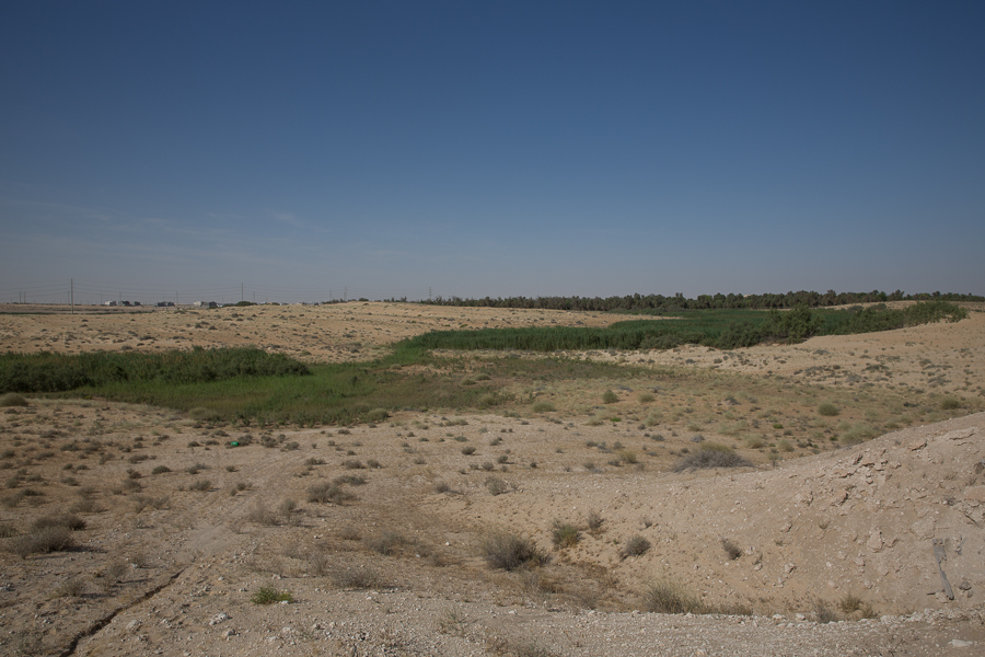 Abqaiq Wetlands