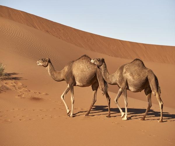 https://www.bioorbis.org/2019/04/como-animais-endotermicos-sobreviver-deserto.html