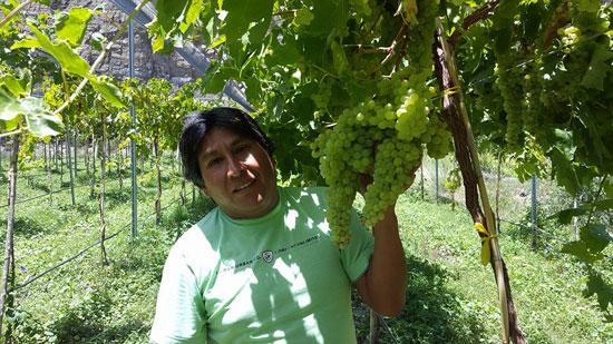 Nuestra Provincia tiene frutas con calidad de exportación
