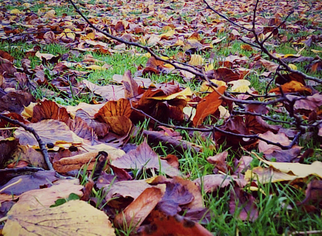 Autumn leaves on the grass