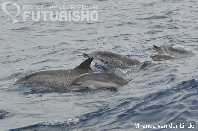 Azores whale watching Futurismo: Futurismo on TV ...