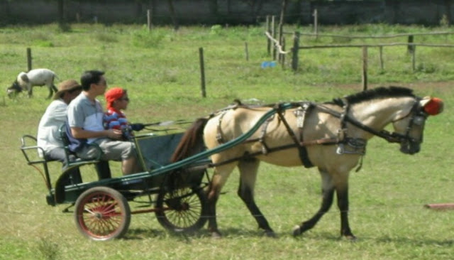 Kursus kurir kereta de ranch
