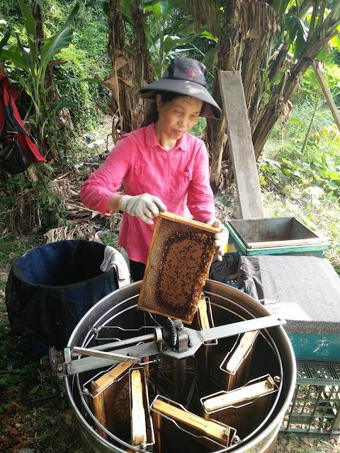 採收蜂蜜@愛蜂園,台灣養蜂場,健康伴手禮,天然蜂蜜,蜂花粉,蜂蜜醋,蜂蜜蛋糕,蜂王乳,蜂王漿,台灣養蜂協會會員,客製化禮盒,台灣蜂蜜,純蜂蜜,蜂蜜檸檬,產品經SGS檢驗合格,