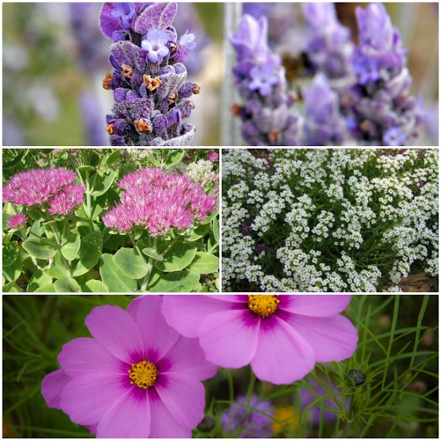 Best Perennials to attract butterflies to your garden.