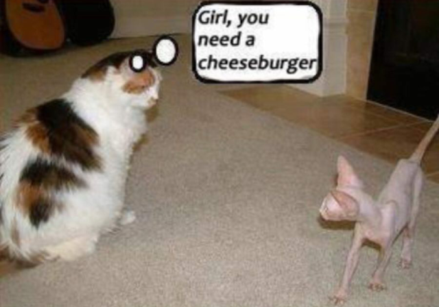 Girl, You Need A Cheeseburger Meme