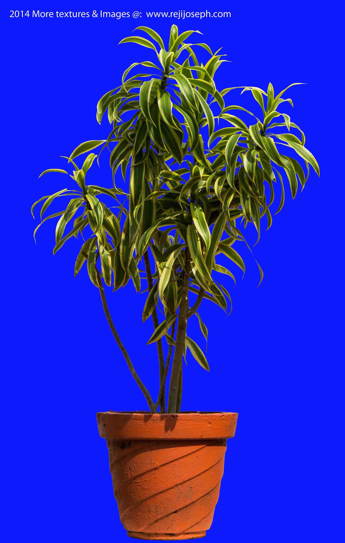 Garden plants texture 00020