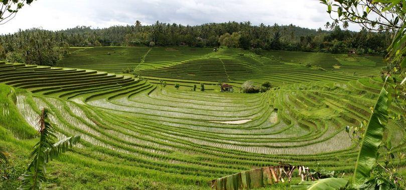 Jenis Jenis Pertanian Rakyat