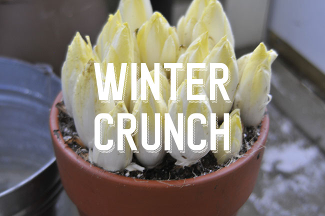 Forcing Winter Vegetables